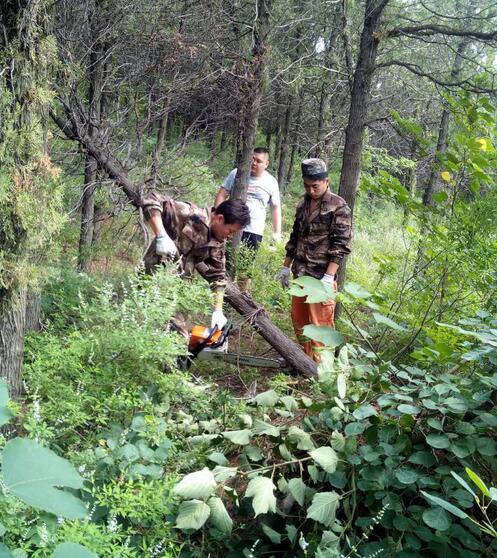 济南市林场开展风景林地内枯枝死树专项清理行动